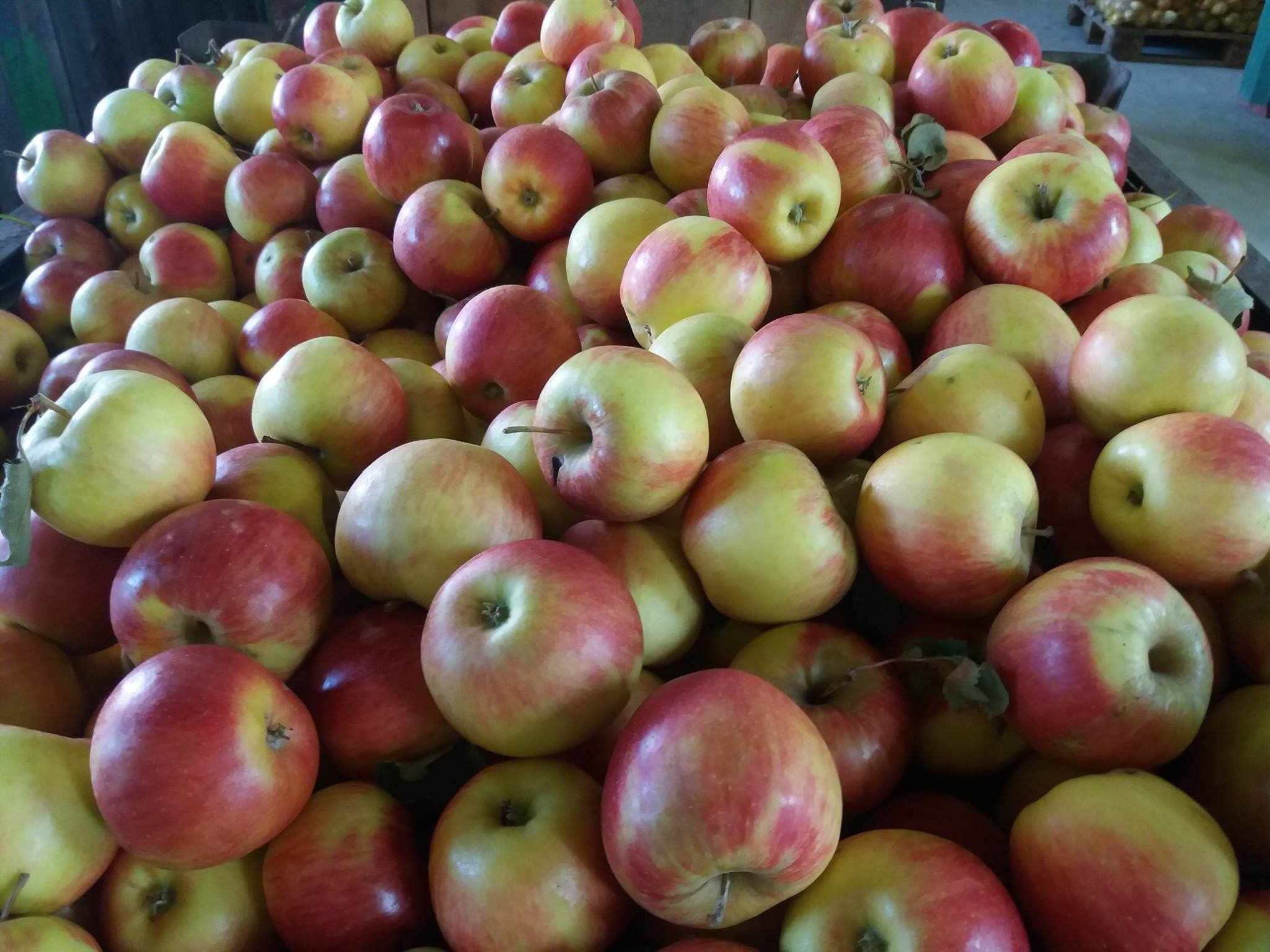 Poznej svého farmáře 2017 zakončily jablečné sady